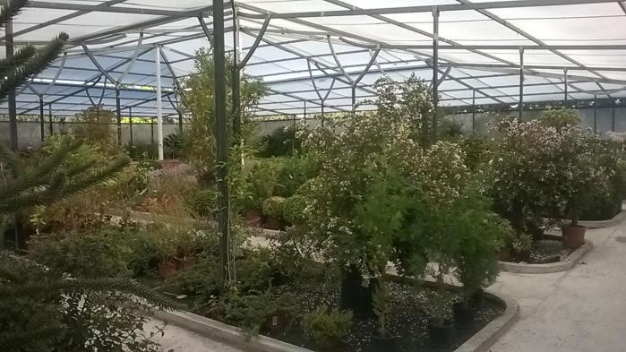 Cultivo de rboles y arbustos san sebasti n de los reyes for Viveros frutales